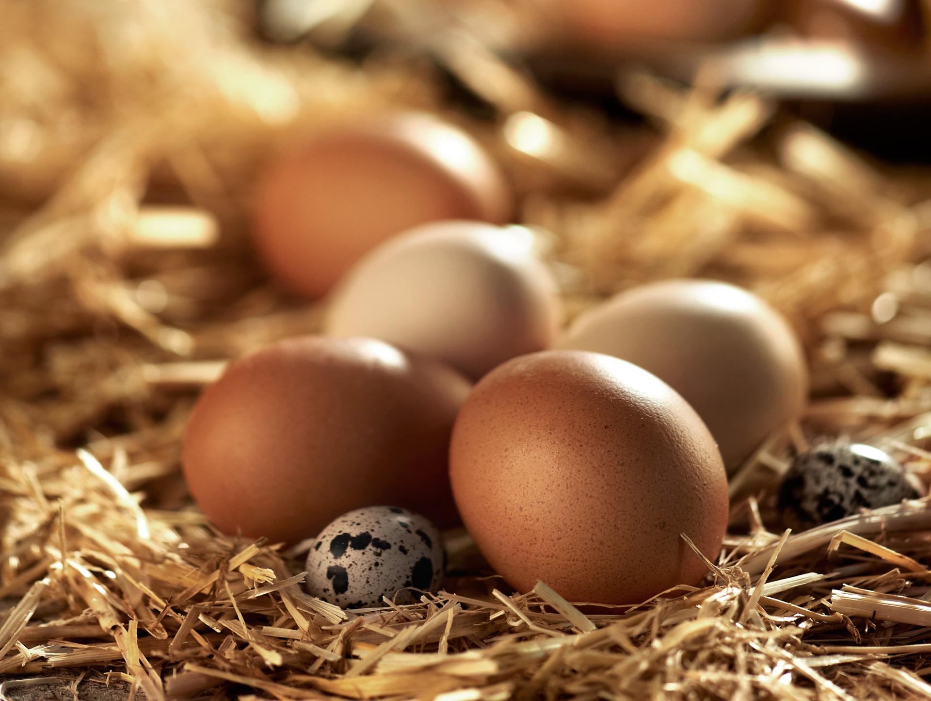 Art_Eggs.jpg